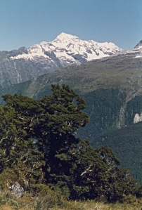 View across Hollyford Valley