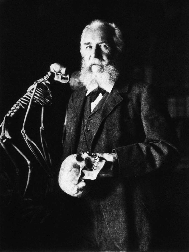 Ernst Haeckel (1834-1919)
