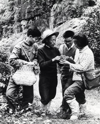 An herb grower teaches barefoot doctors about medicinal plants, Mount Huangshan, China, 1977