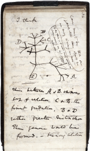 Darwin's first diagram of an evolutionary tree from his first notebook on transmutation of species (1837).