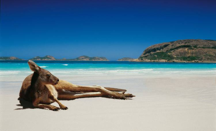 Kangaroo-Laying-Back-On-The-Beach-Without-A-Care-In-The-World