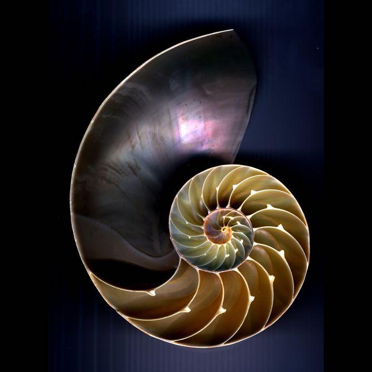 shell-spiral